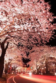 Cherry blossoms Street at night, Hitachi City, Ibaraki, Japan./ taking a walk in a soft pink night.