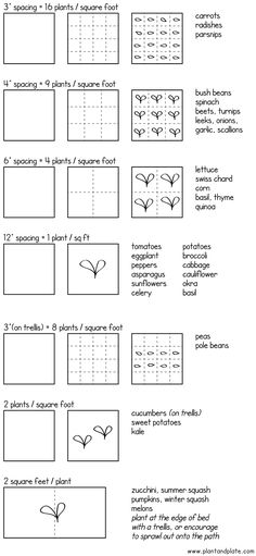 Square foot garden spacing guide