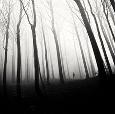 Forest - where much on Unholy Pursuits takes place. For more information, go here: http://suzannerock.com/books-2/paranormal/immortal-hungers-series/