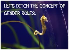 """""""Let's ditch the concept of gender roles. - Feminist Seahorse FTW!"""" #feminism #gsm #lgbtq"""