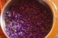 Veilchen-Thymian Sirup - Rezept mit Bild - kochbar.de