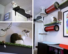 Especially love the tunnels idea! (My Cat From Hell, Jackson Galaxy, Kate Benjamin Catification, Kashmir Darla) Jackson Galaxy, Cat Climbing Wall, Cat Climber, Cat Shelves, Cat Tunnel, Cat Enclosure, Cat Room, Pet Furniture, Cat Wall