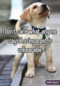 That is the truth #DogQuotes