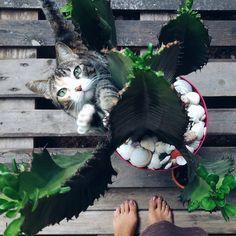 Coisa exibida da minha vida ❤🐱🌵🌼 #flordecacto #cat #catlovers