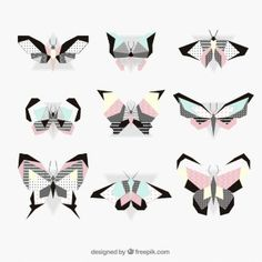 Modern butterfly collection