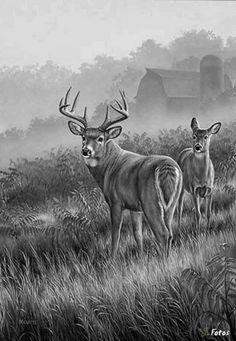 Lifting Fog-Whitetail Deer Painting by Rosemary Millette Wildlife Paintings, Wildlife Art, Animal Paintings, Animal Drawings, Deer Paintings, Deer Drawing, Deer Pictures, Deer Art, Pet Birds