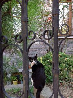 Amasralı at the garden gate