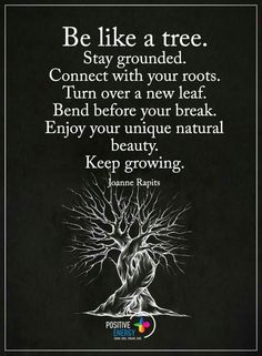 Be like a tree. Stay grounded. Connect with your roots. Turn over a new leaf. Bend before your break. Enjoy your unique natural beauty. Keep growing. thedailyquotes.com