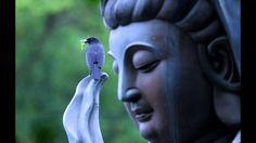 Prajnaparamita hrdaya sutra. Heart sutra. El sutra del corazon