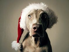 30 Cute Animals Dressed For Christmas - Cutest Paw
