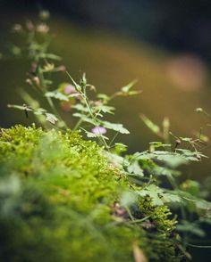 Profiter de l'été  #france #ateliertuffery #jeans #denim #madeinfrance #vacances #soleil #befree #nature #wild