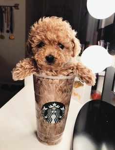 Pupper in a cup Animal 2, Beautiful Dogs, Animals Beautiful, I Love Dogs, Puppy Love, Cute Creatures, German Shepherd Dogs, Baby Animals, Funny Animals