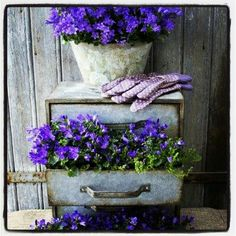 Drawers turned into flower pots