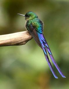 55 Facts about Hummingbirds. Did you know they are only found in the Americas?