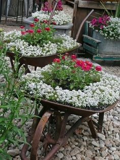 """Vintage Wheel Barrows planted with flowers"""