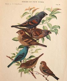 Vintage bird print