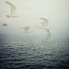 Ocean Art, Birds, Seagulls, Nature Photography, Nautical Art Print, Misty Navy Blue Sea - Dreaming is Free