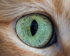 photo 15-Macro-Shots-of-Cat-Eyes14__880_zpsse0t0rq3.jpg