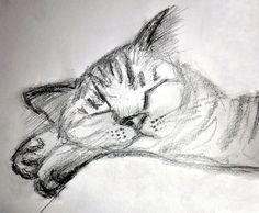 Cat - 15 minute Graphite pencil
