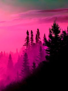 Pink sky black tree, clear sky pink tree. On a hill or in the center out alone.