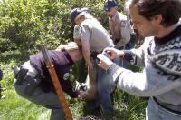 Wildlife officers tranquilize lion in Boulder yard