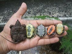 Assortment of Turtles.