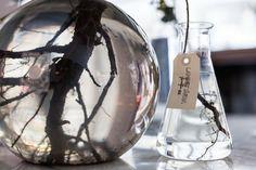 Sprouting Roots in a Vintage Lab Glass at Landet Järna Flower Shop in Sweden | Gardenista