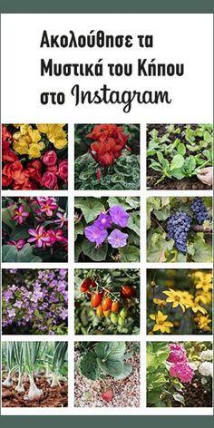 Φροντίδα δυόσμου σε γλάστρα | Τα Μυστικά του Κήπου Margarita, Plants, Instagram, Gardening, Trumpet, Lawn And Garden, Margaritas, Plant, Planets