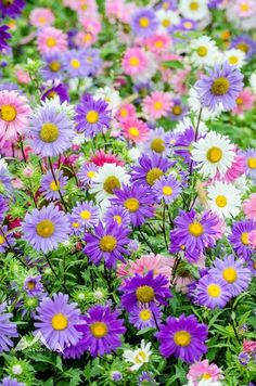 All purple flowers are beautiful and with meanings of their own. Beautiful purple flowers for your garden May Flowers, Amazing Flowers, Pretty Flowers, Purple Flowers, Colorful Flowers, Spring Flowers, Wild Flowers, Flowers Pics, Purple Daisy
