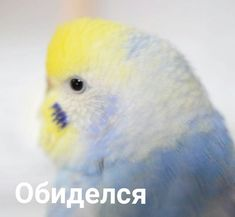 Meme Pictures, Reaction Pictures, Funny School Memes, Funny Memes, Pictures With Meaning, Cute Backgrounds For Iphone, Happy Memes, Russian Memes, Cute Love Memes