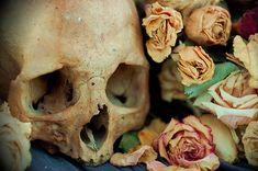 Dusty skull