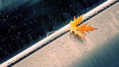 Beautiful Rain Wallpapers for your desktop 1920×1200 Rain Wallpaper (38 Wallpapers) | Adorable Wallpapers