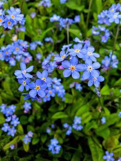 17 Blue Perennials for your Garden - Garden Lovers Club Best Perennials, Shade Perennials, Flowers Perennials, Little Flowers, Blue Flowers, Wild Flowers, Summer Flowers, Home Design, Yard Design