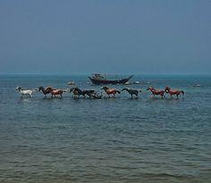 Horses, Bushehr, Persian Gulf coast, Iran (Persian: ساحل خلیج فارس / بوشهر ) Photo by: Milad Rafat