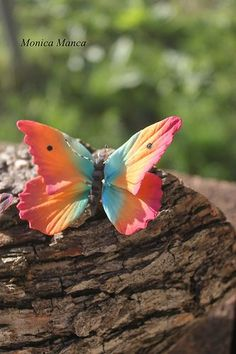{A colorful Sugar Butterfly by MonicaManca Cakes} Butterfly Effect, Butterfly Kisses, Butterfly Flowers, Butterfly Wings, Butterfly Feeder, Rainbow Butterfly, Monarch Butterfly, Beautiful Bugs, Beautiful Butterflies