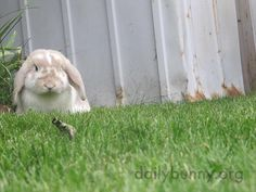Bunnies Quietly Enjoy the Backyard 2