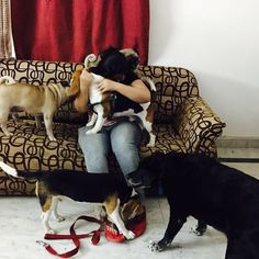 Hehhe That's the best welcome you get after a vacation. Lol #LifeOfManpreet #FinixPost #SoManyDogs #Dogs #dogsofinstagram #dogstagram #dogsofinstaworld #labrador #beagle #pug #dogsoninstagram #dogsarefamily #dogsdaily #dogsarethebest