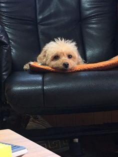 ジョブズツール看板犬ご紹介 ジョブズツールの営業日誌