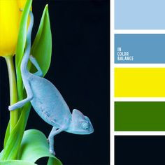 azul celeste, celeste, color amarillo vivo, color de la naturaleza, color de las tulipas, color verde hoja, combinación de colores para decorar interiores, elección del color, matices fríos y cálidos, selección de colores para el diseño de interiores, tonos amarillos, tonos celestes, verde, verde fuerte.
