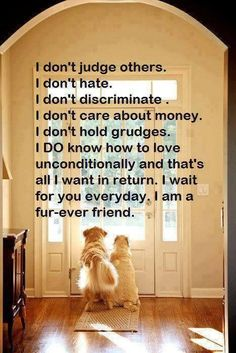 Dogs love us no matter what! People could stand to learn a few things from dogs