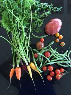 Memorial Day Harvest in Laguna Beach