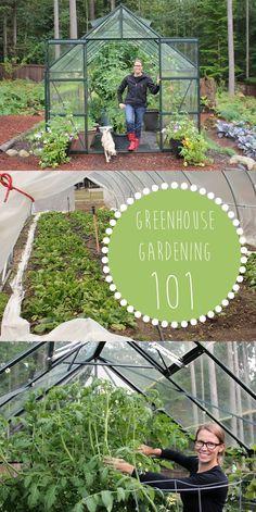 Greenhouse Gardening 101