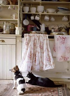 Murmuring Cottage photo.... these are lookalikes of my Darcy and Digit, watching for titbits in the kitchen as they do.