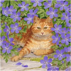 enl - Shady Retreat, Ginger Cat