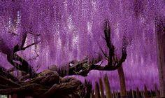 Gli alberi più belli del mondo! - Romina Rossi