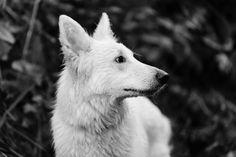 Lyra white GSD