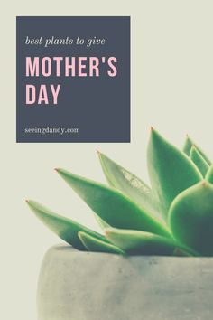 Great gift idea for mom! These are the best plants that you can give for Mother's Day. From lilac to hydrangea to aloe and more! Perfect for mom's garden. #garden #gardening #momlife #mothersday #giftideas