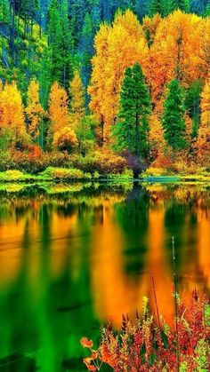 Fall reflected facebook.com/HalloweenDecorations