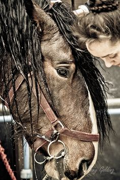 Wet horse - captured at the Shire Horse Spring Show