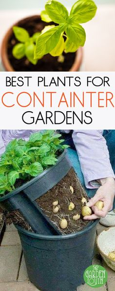 Growing a garden can be a very fulfilling experience, something that connects you to the earth brings you into an active role in providing a bountiful harvest. So many of our parents and grandparents grew up in locations and circumstances that allowed families to grow and cultivate large vegetable gardens. Sadly, with the